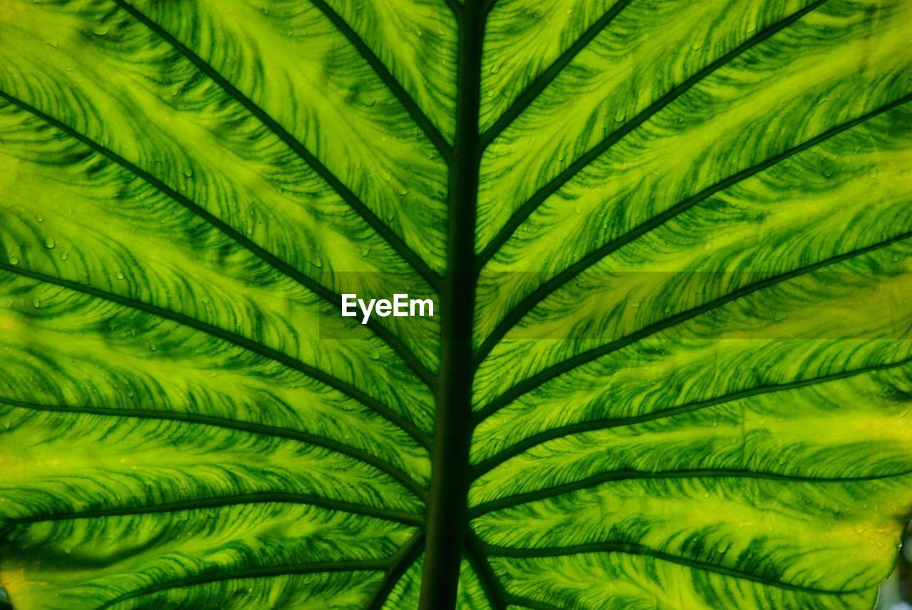 green color, leaf, plant, nature, growth, no people, close-up, day, frond, beauty in nature, fern, freshness, outdoors, fragility, palm tree, backgrounds