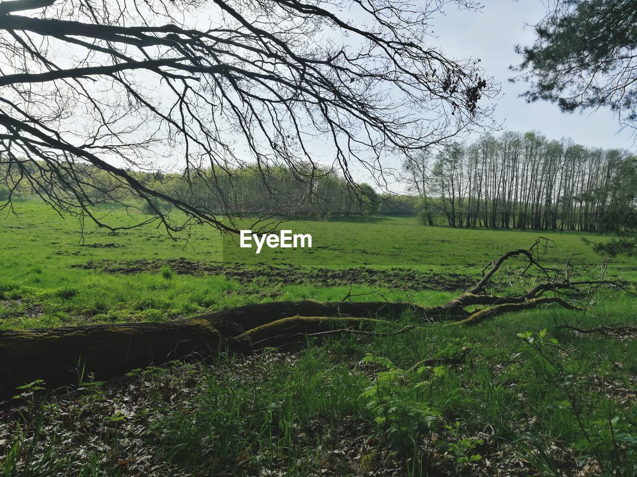 plant, tree, land, tranquility, tranquil scene, green color, grass, beauty in nature, field, nature, landscape, growth, no people, scenics - nature, environment, day, non-urban scene, sky, outdoors, forest