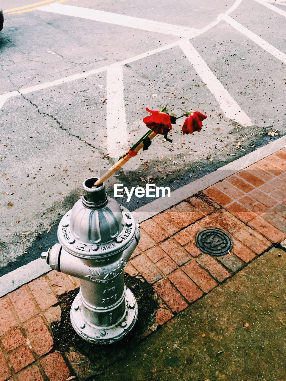 High Angle View Of Roses In Fire Hydrant On Footpath