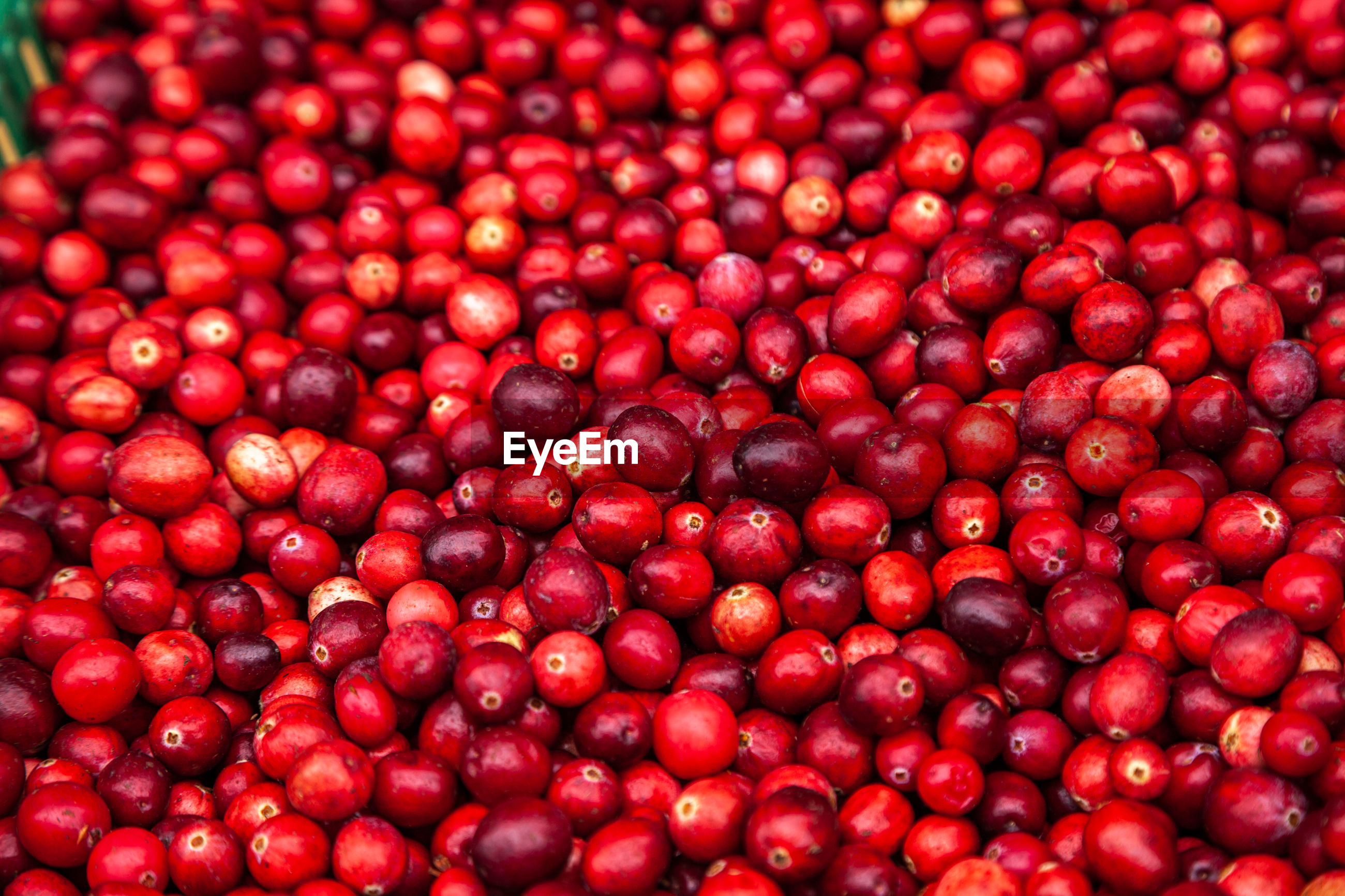 Ripe cranberries for background. red cranberries. fresh organic fruits background. cranberries