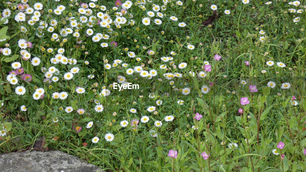 plant, flower, flowering plant, beauty in nature, freshness, nature, growth, vulnerability, fragility, green color, no people, day, grass, land, flowerbed, petal, field, outdoors, meadow, flower head, springtime
