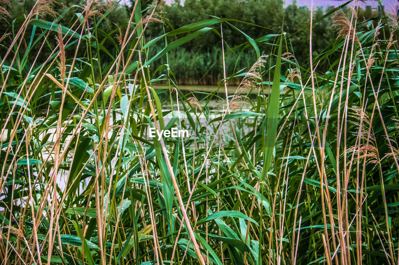 growth, nature, green color, tranquility, plant, day, outdoors, grass, no people, beauty in nature, water, tranquil scene, backgrounds, close-up, freshness