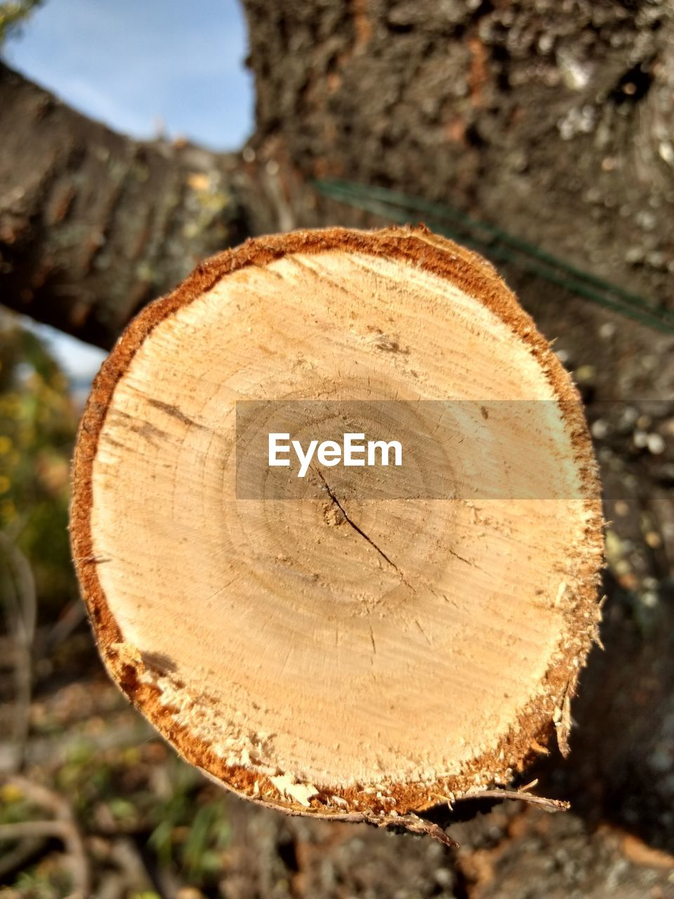 tree, close-up, cross section, wood, focus on foreground, wood - material, timber, forest, day, deforestation, shape, log, no people, nature, tree ring, land, textured, circle, bark, outdoors