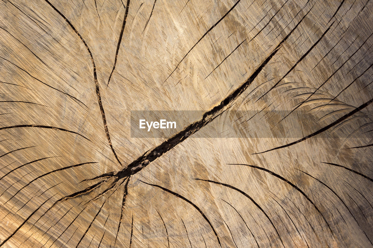 backgrounds, tree, tree ring, full frame, wood - material, textured, no people, bark, pattern, close-up, tree stump, cracked, brown, plant, nature, wood, day, outdoors, natural pattern, rough, wood grain, dead plant, concentric