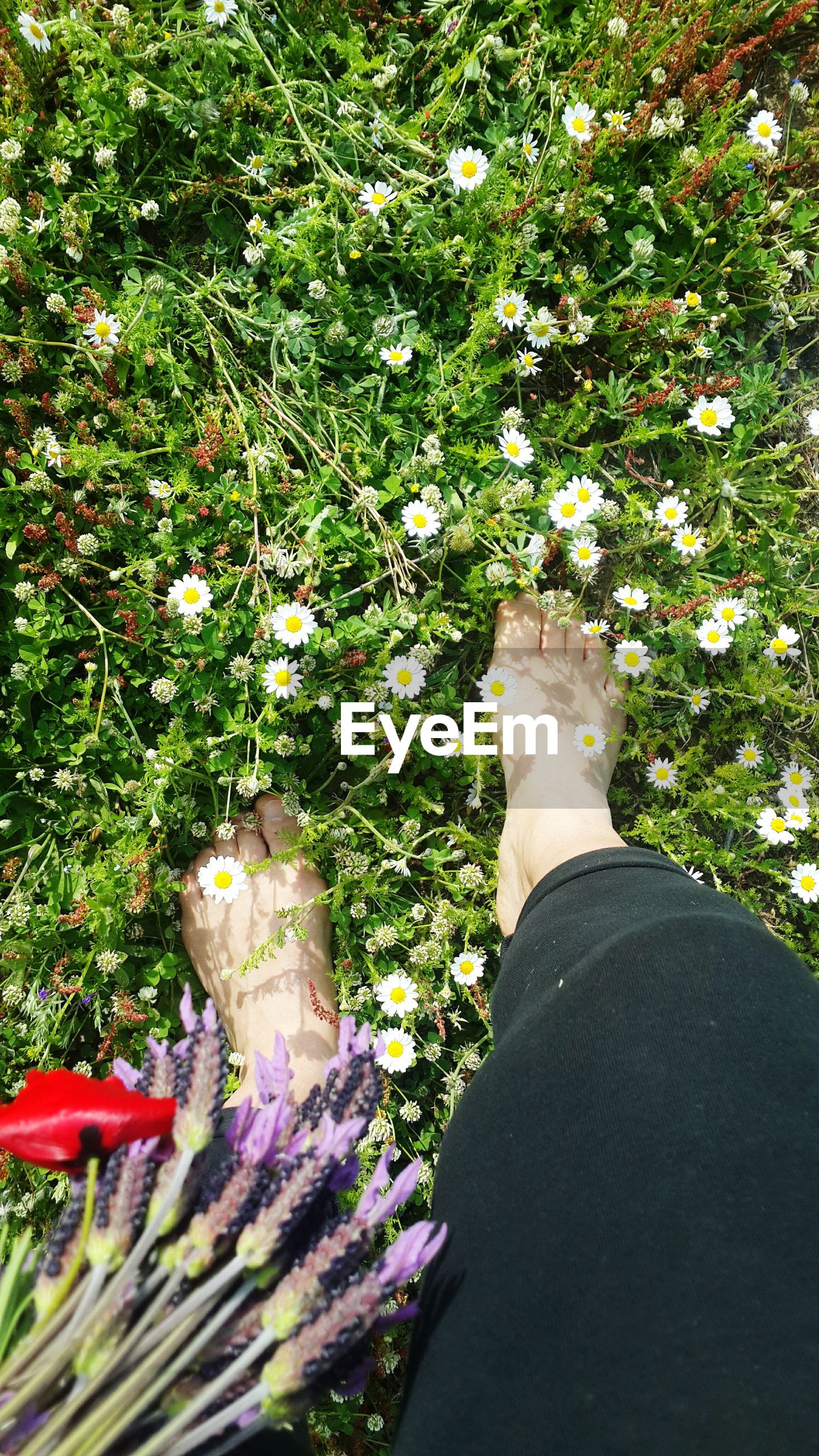 growth, one person, day, flower, nature, plant, outdoors, real people, human leg, human body part, grass, tree, freshness, low section, beauty in nature, people