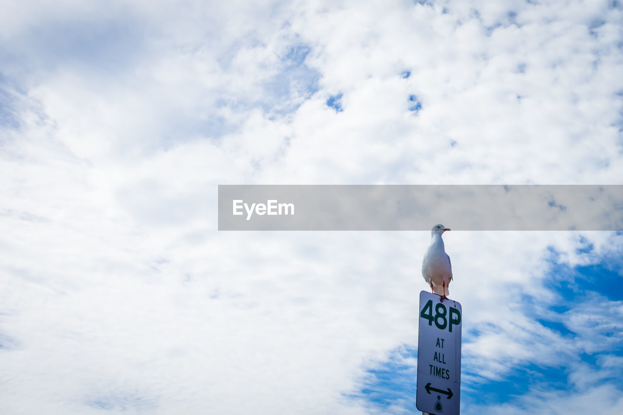 Low Angle View Of Seagull Perching On Sign Board Against Cloudy Sky