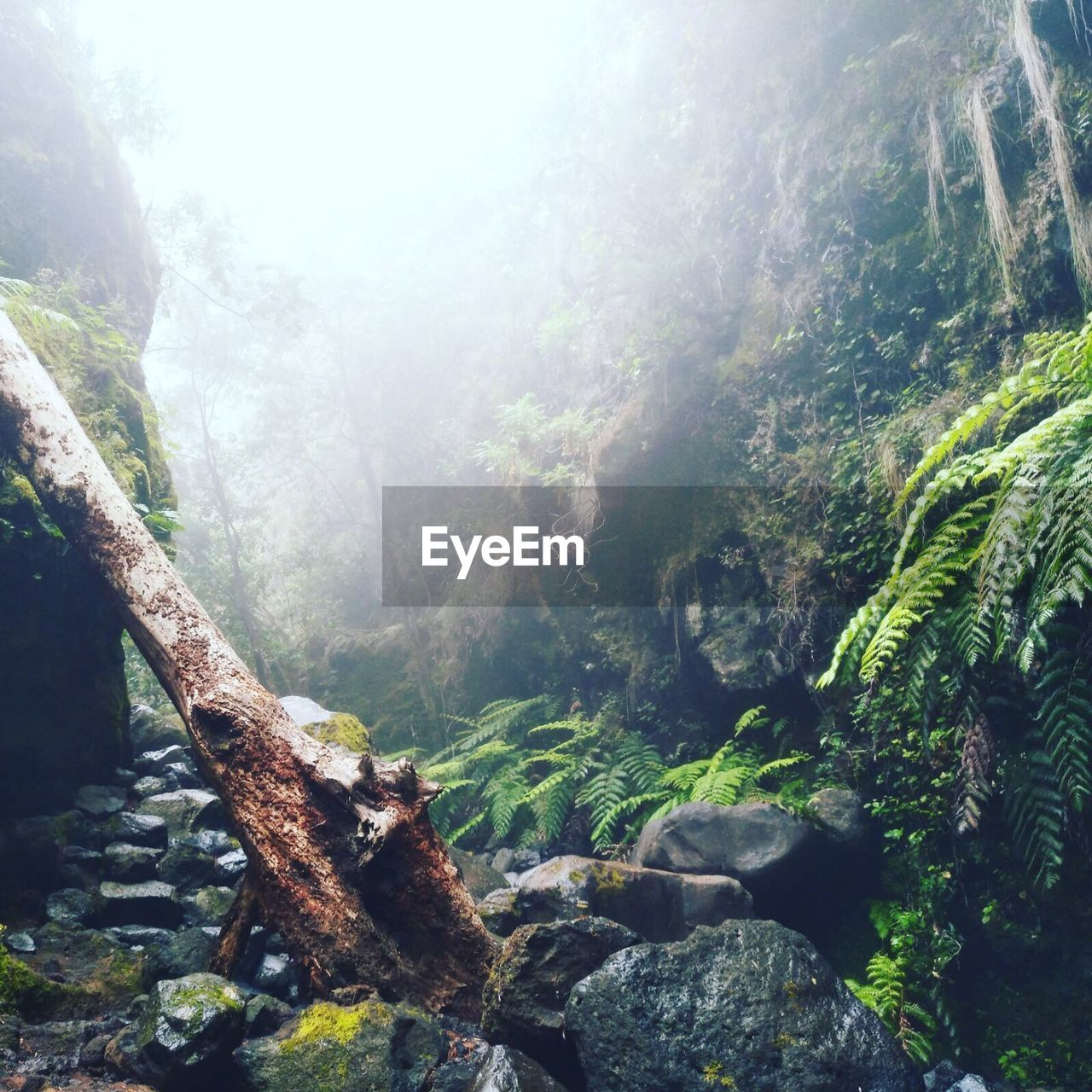 nature, tree, beauty in nature, day, tranquil scene, no people, forest, tranquility, scenics, outdoors, mountain, tree trunk, growth, moss, landscape, fog, sky
