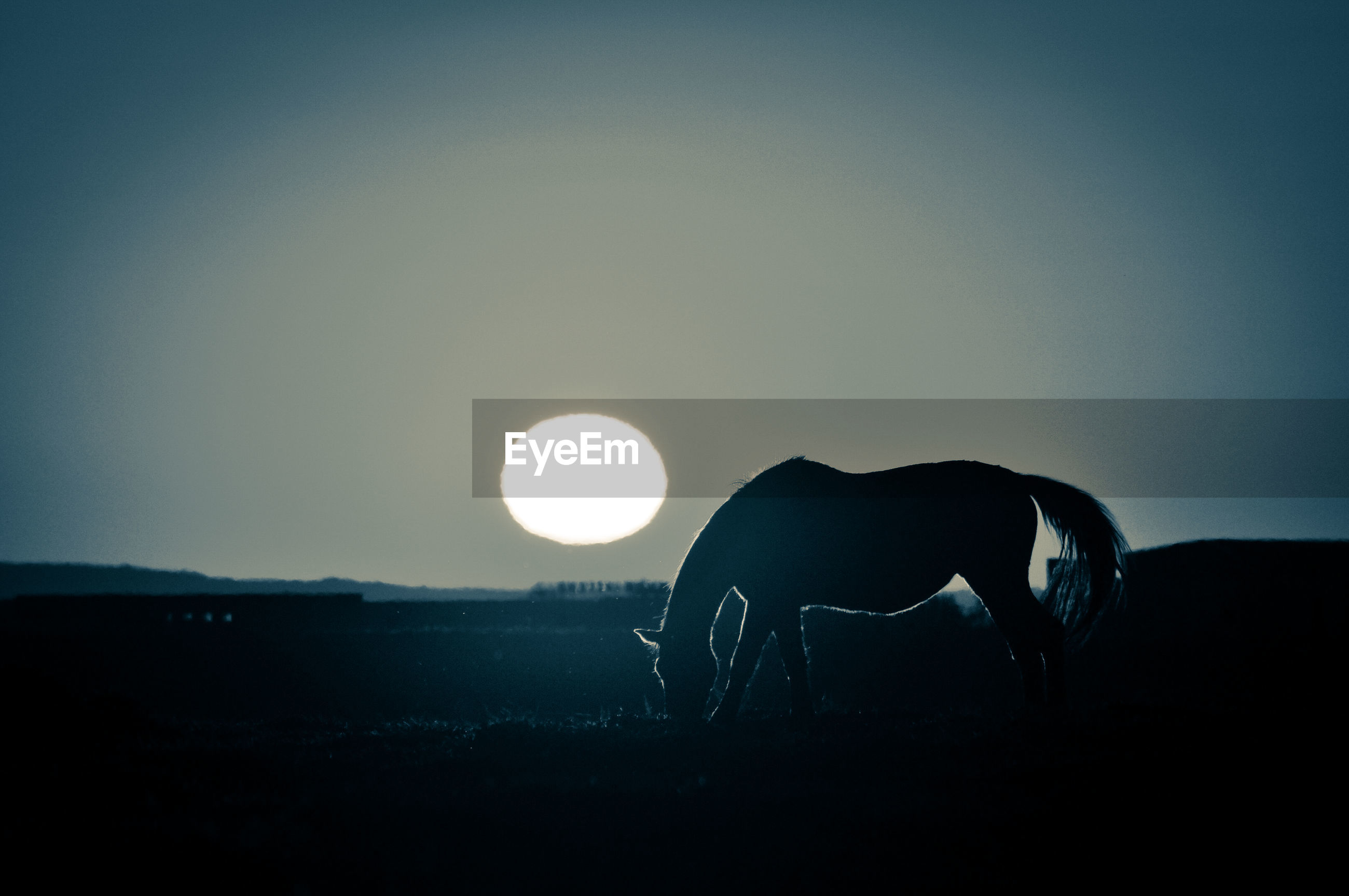 Silhouette of horse on field against sky at sunset