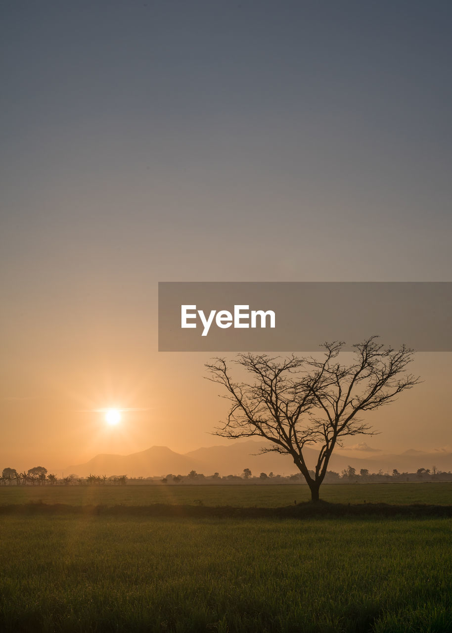 sky, beauty in nature, sunset, tranquility, field, tranquil scene, scenics - nature, plant, landscape, tree, sun, environment, land, non-urban scene, growth, nature, no people, bare tree, sunlight, copy space, outdoors, lens flare, isolated