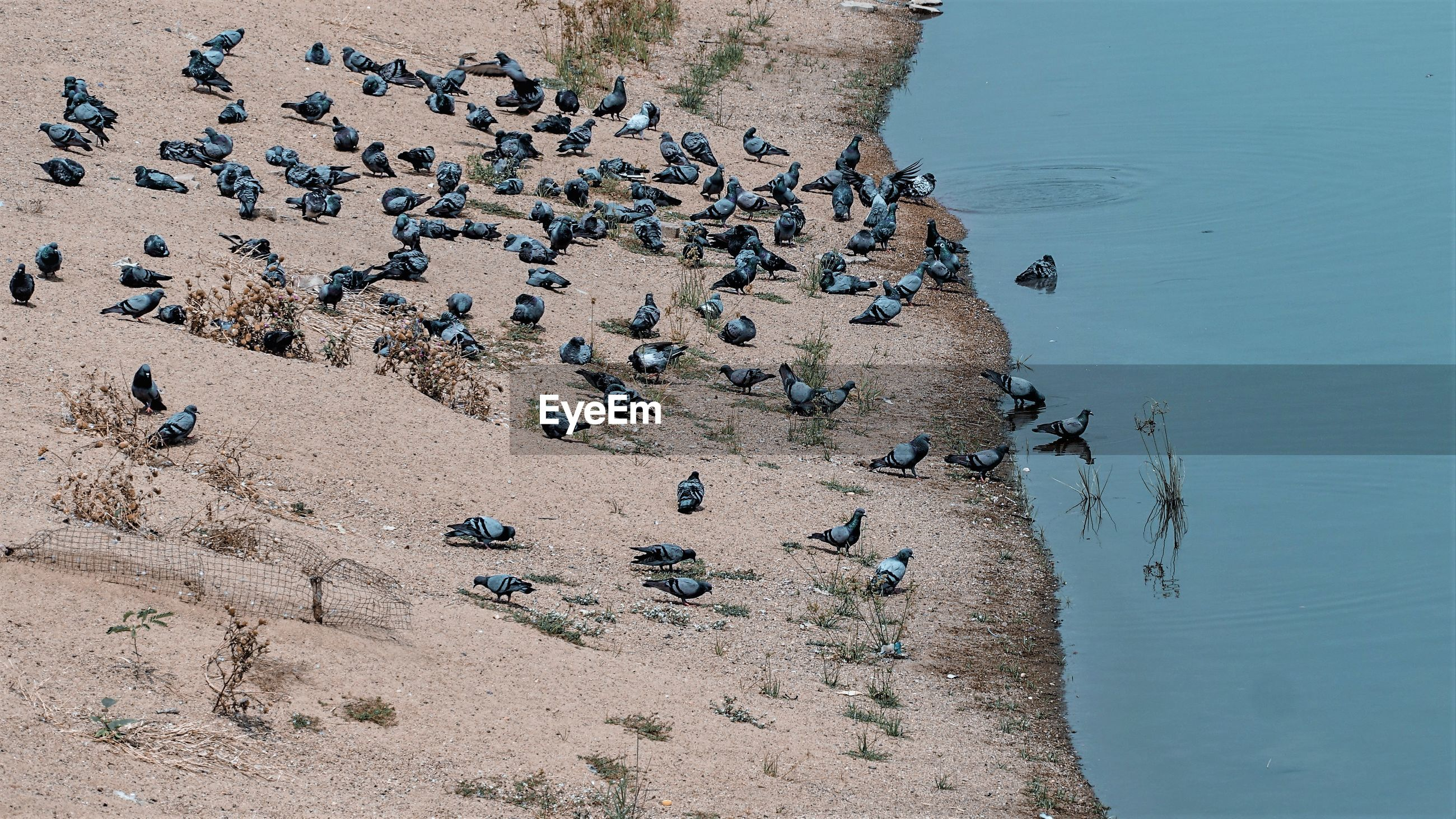 HIGH ANGLE VIEW OF BIRDS ON THE BEACH