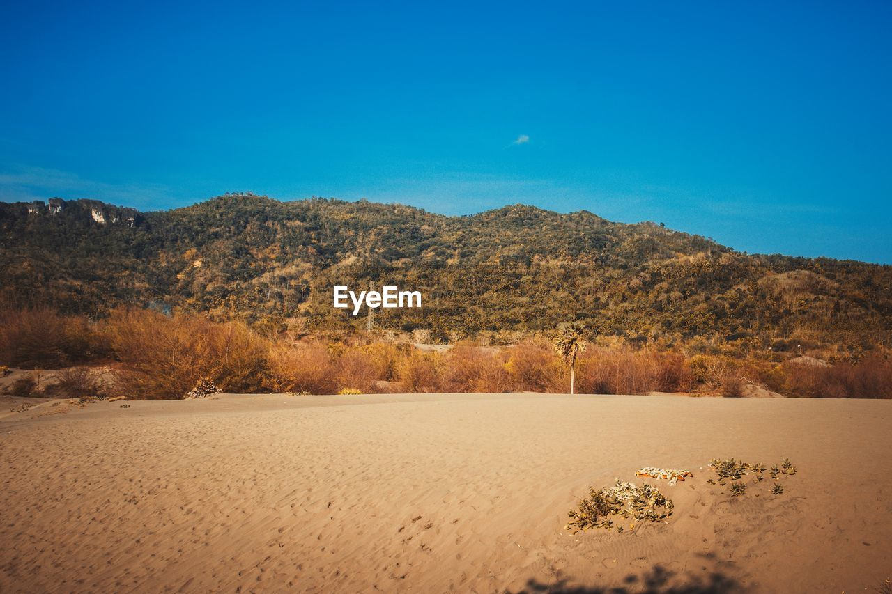 sky, landscape, blue, environment, scenics - nature, beauty in nature, tranquility, tranquil scene, nature, land, clear sky, mountain, sand, no people, copy space, non-urban scene, plant, tree, day, idyllic, arid climate