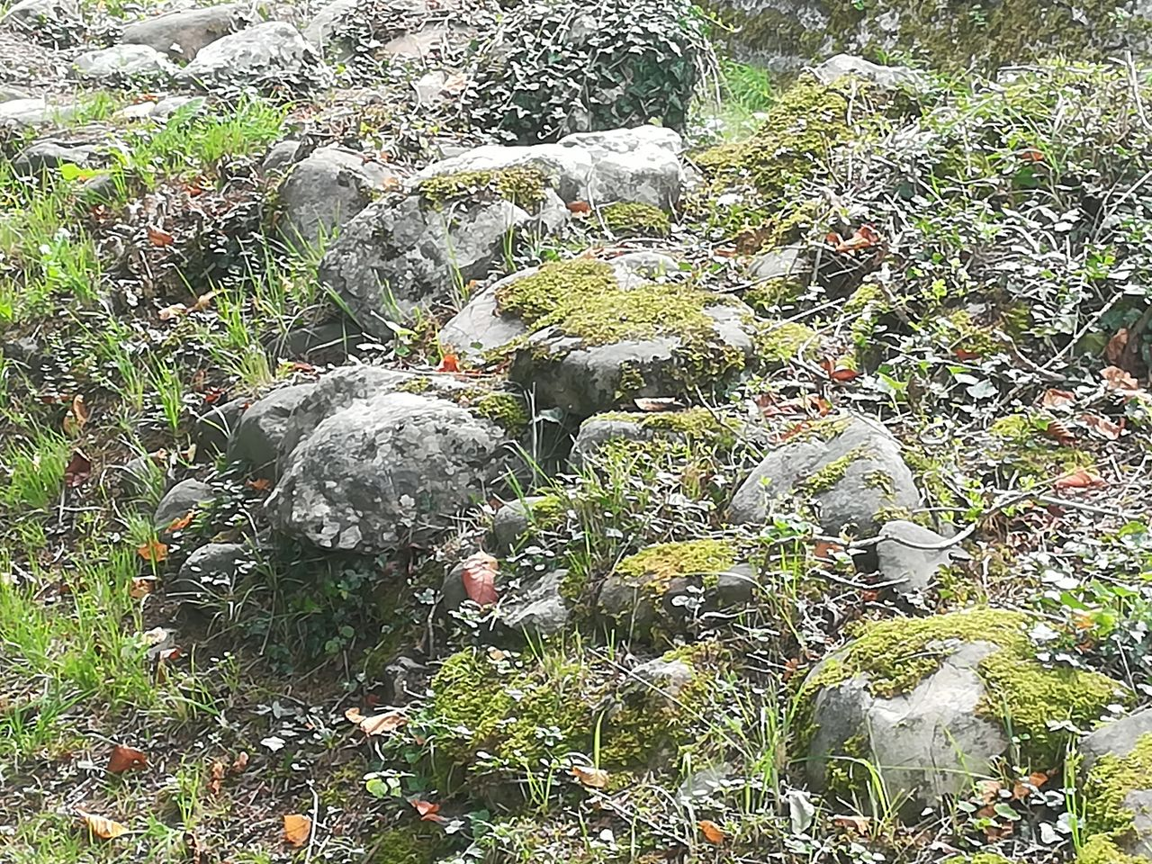 plant, growth, nature, no people, day, land, food, beauty in nature, solid, food and drink, green color, field, moss, rock, outdoors, high angle view, rock - object, freshness, grass, tree