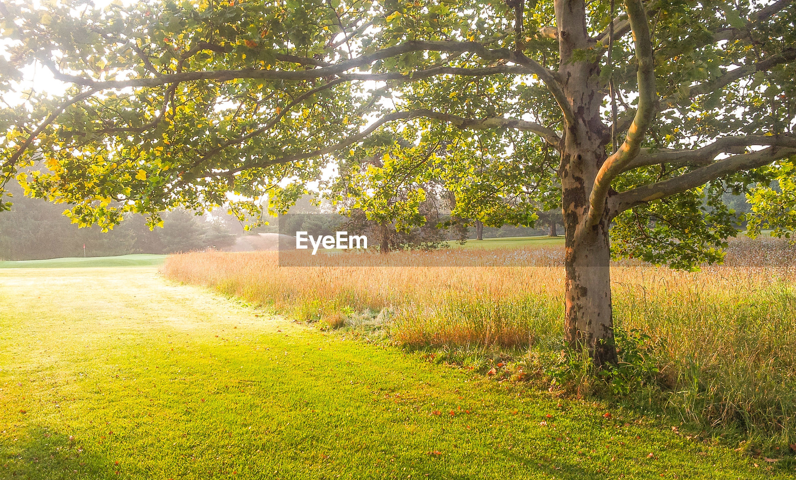 tree, growth, tranquility, green color, beauty in nature, tranquil scene, nature, grass, scenics, field, tree trunk, landscape, branch, sunlight, yellow, plant, day, footpath, outdoors, idyllic