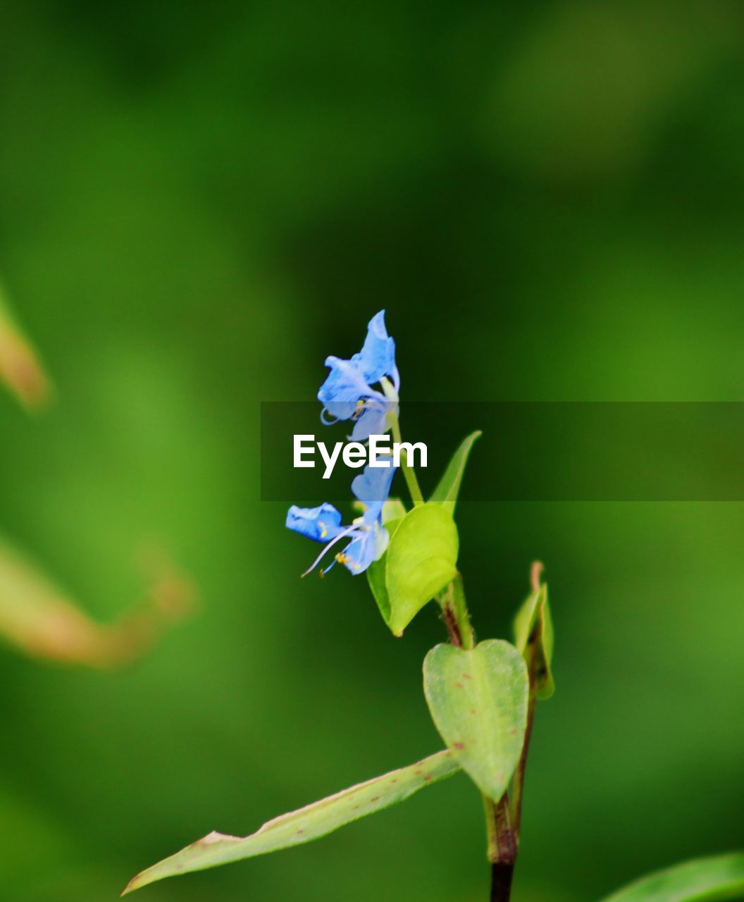 nature, growth, plant, flower, fragility, no people, beauty in nature, green color, day, outdoors, leaf, close-up, animal themes, one animal, animals in the wild, freshness, flower head