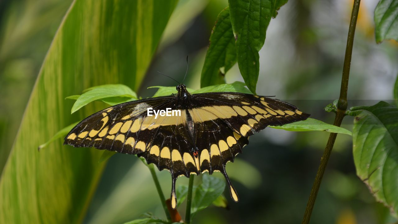 insect, animal wing, animal wildlife, animals in the wild, one animal, animal themes, invertebrate, butterfly - insect, beauty in nature, plant, animal, flower, close-up, growth, no people, vulnerability, nature, fragility, focus on foreground, day, butterfly, flower head, outdoors, pollination