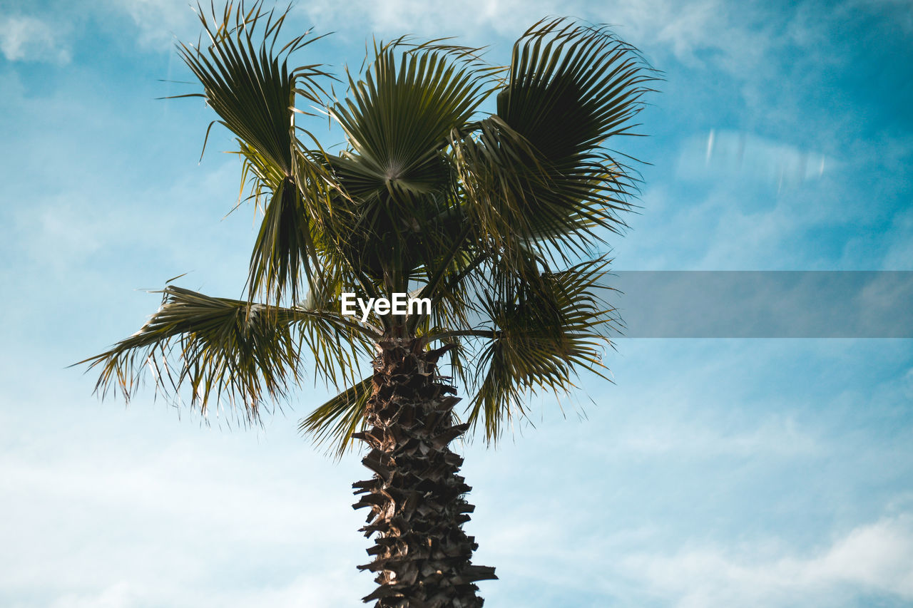 sky, palm tree, low angle view, tropical climate, cloud - sky, tree, plant, growth, no people, nature, day, tranquility, beauty in nature, tree trunk, trunk, palm leaf, leaf, outdoors, green color, coconut palm tree, tropical tree