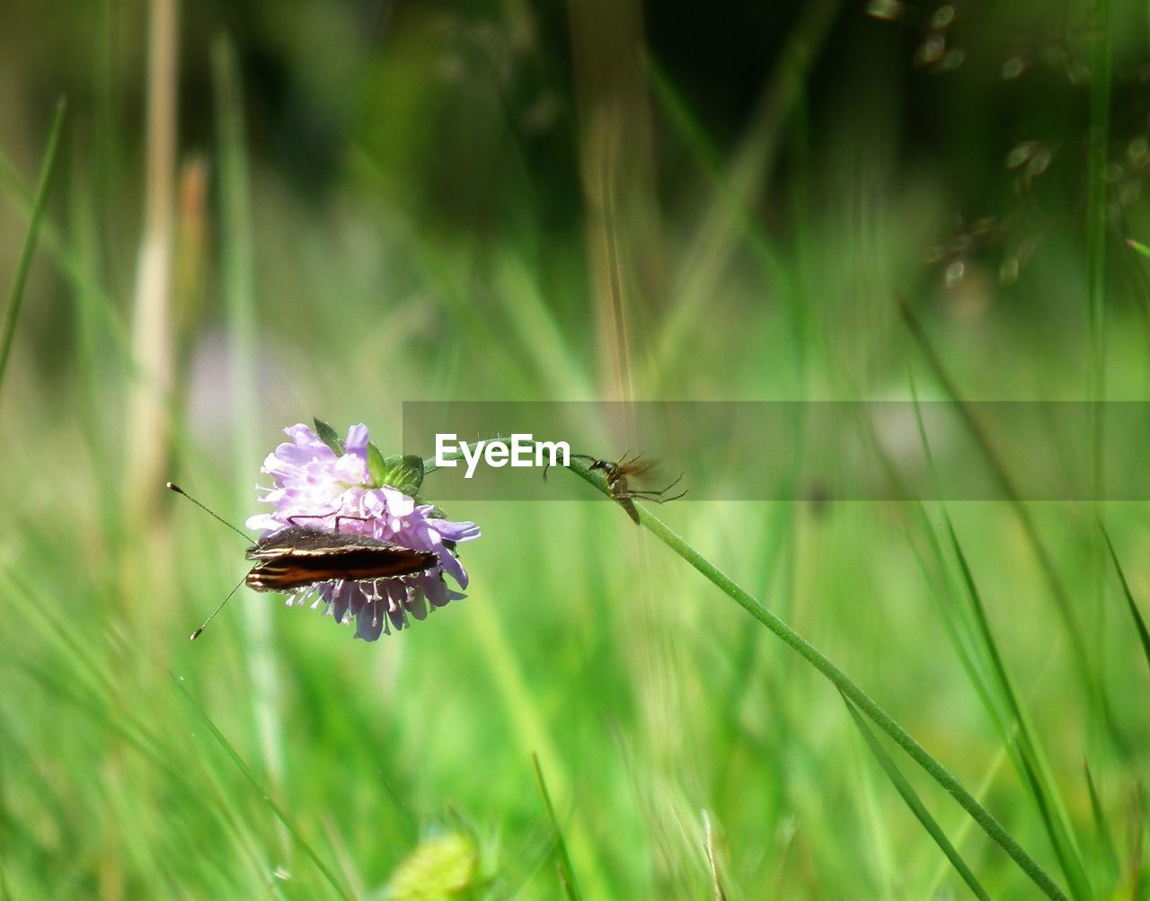 plant, beauty in nature, growth, flower, flowering plant, freshness, fragility, vulnerability, green color, close-up, nature, land, day, selective focus, no people, focus on foreground, field, flower head, outdoors, grass, purple, blade of grass