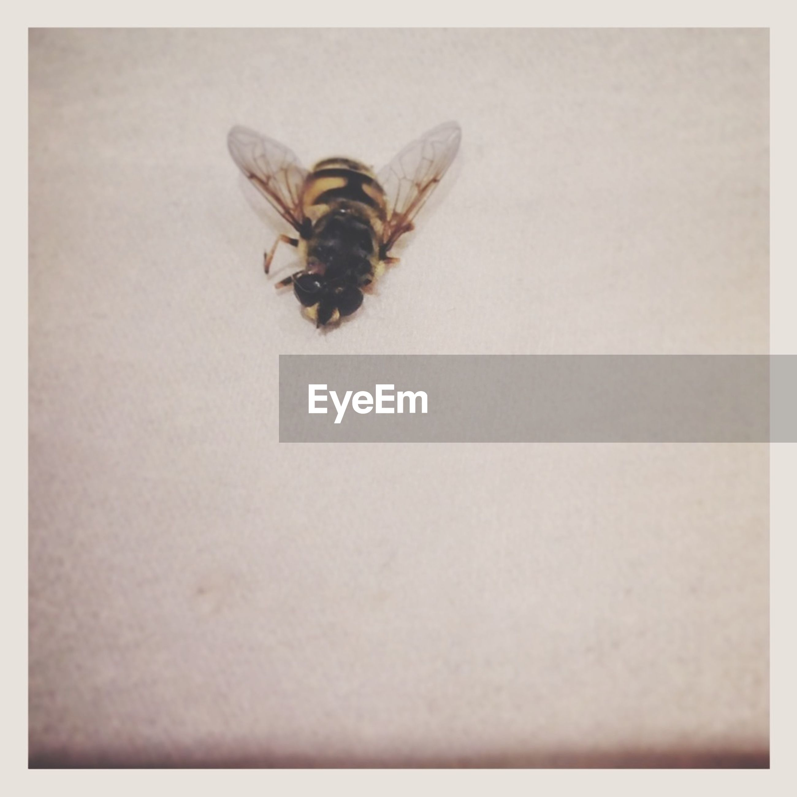 insect, animal themes, one animal, transfer print, wildlife, animals in the wild, auto post production filter, high angle view, indoors, close-up, studio shot, no people, white background, spider, textured, full length, wall - building feature, nature, full frame, copy space