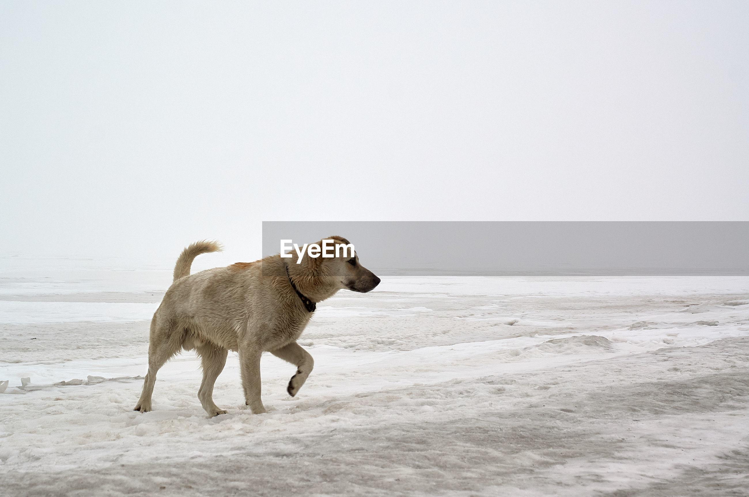 Dog on the snowy beach