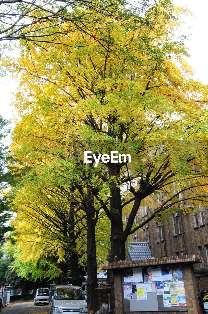 tree, building exterior, day, architecture, outdoors, no people, built structure, autumn, city, nature, sky, close-up
