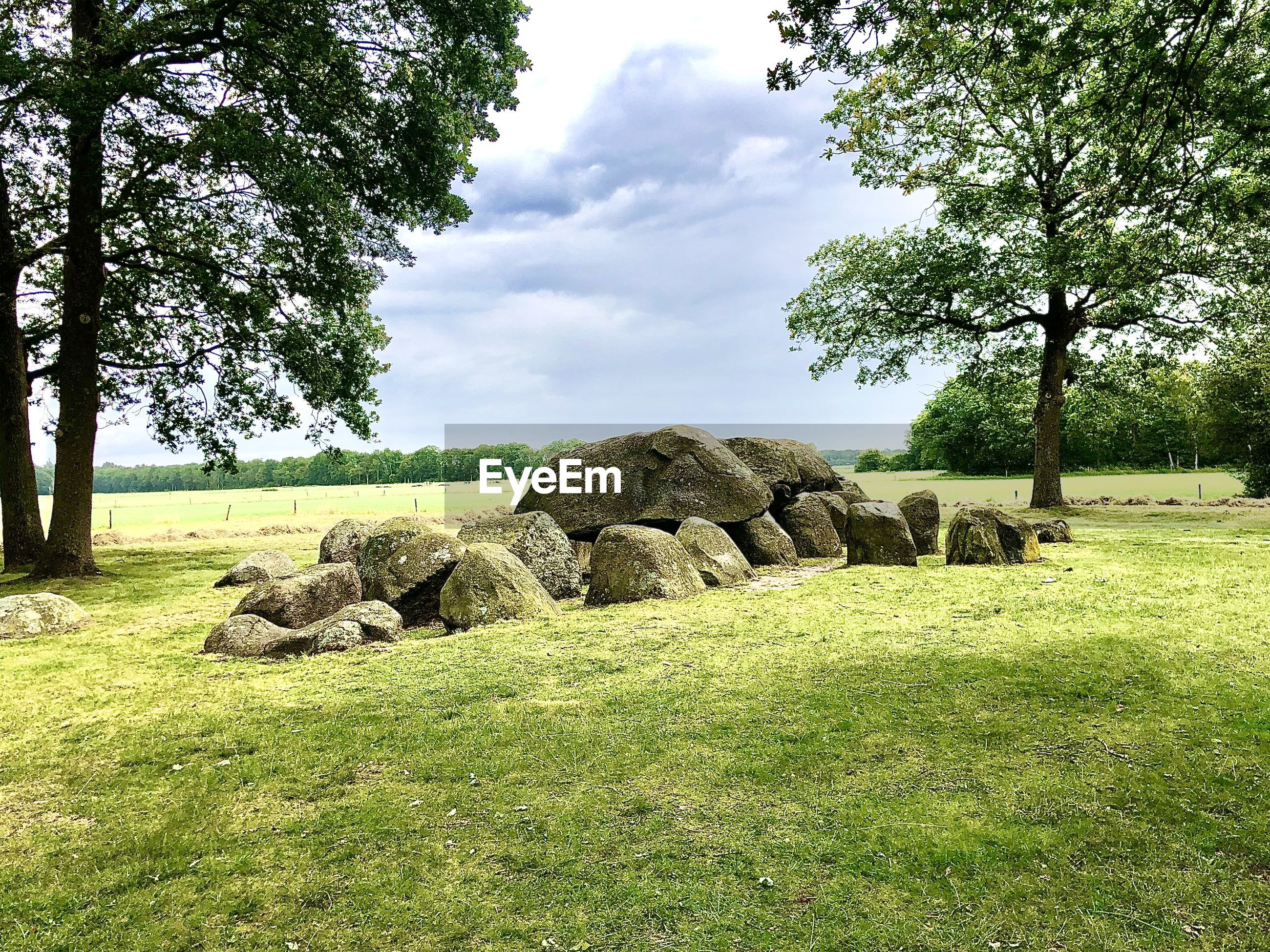 TREES AND ROCKS ON FIELD