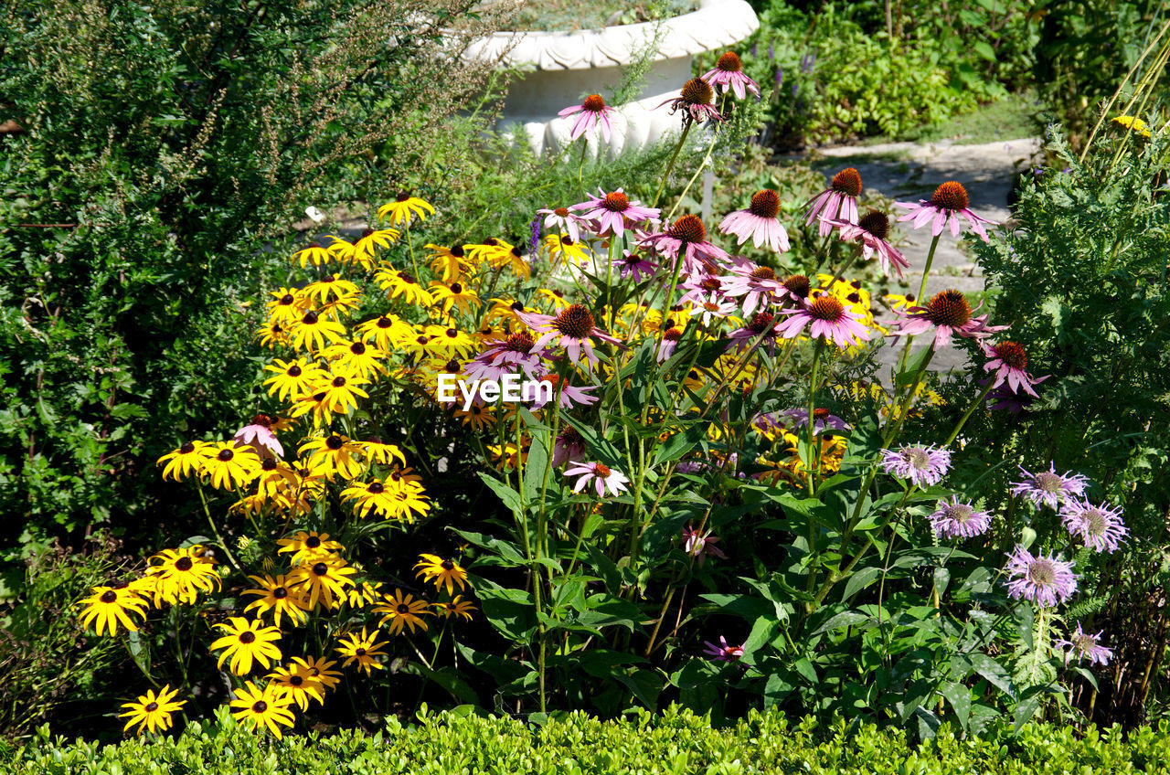 flower, growth, nature, plant, blooming, yellow, outdoors, beauty in nature, freshness, fragility, day, no people