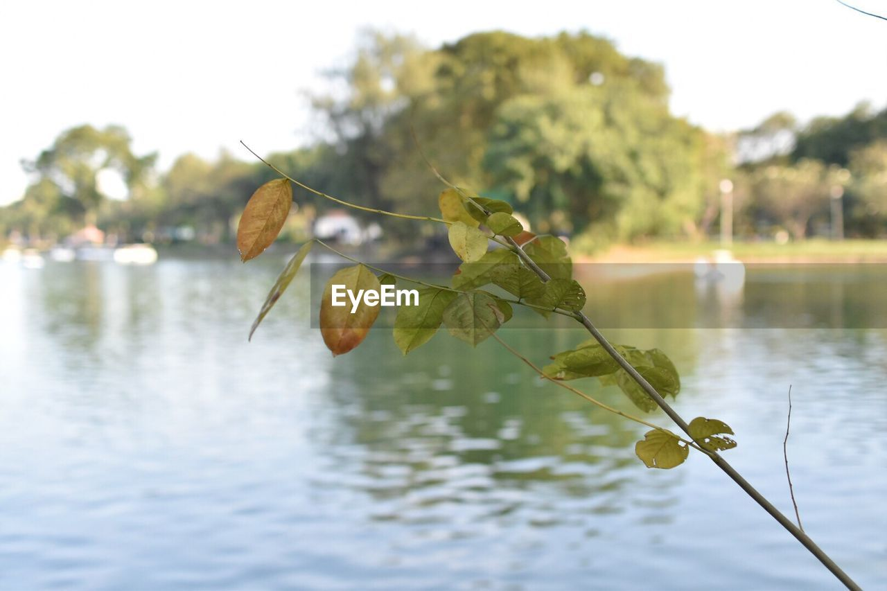 nature, water, leaf, focus on foreground, reflection, lake, no people, day, beauty in nature, growth, outdoors, plant, close-up, tree, sky