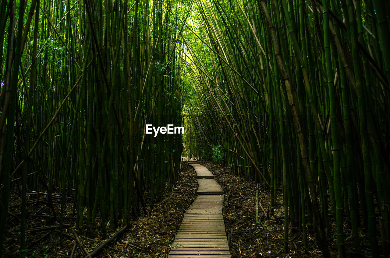 Vanishing Point Of Footpath In Bamboo Forest