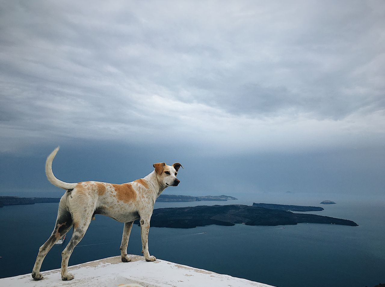 Dog standing on retaining wall against sky