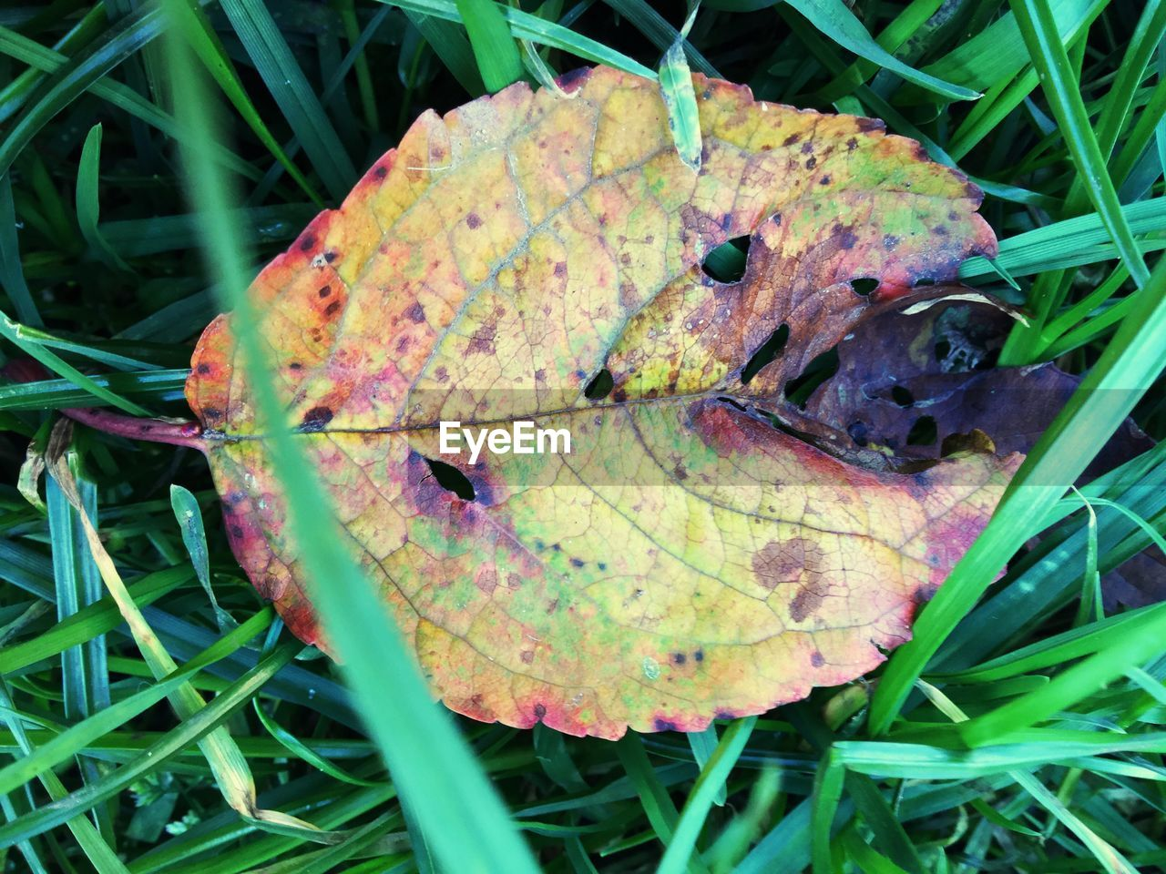 leaf, change, autumn, nature, dry, day, outdoors, one animal, no people, animal themes, growth, close-up, green color, animals in the wild, field, beauty in nature, grass, plant, fragility