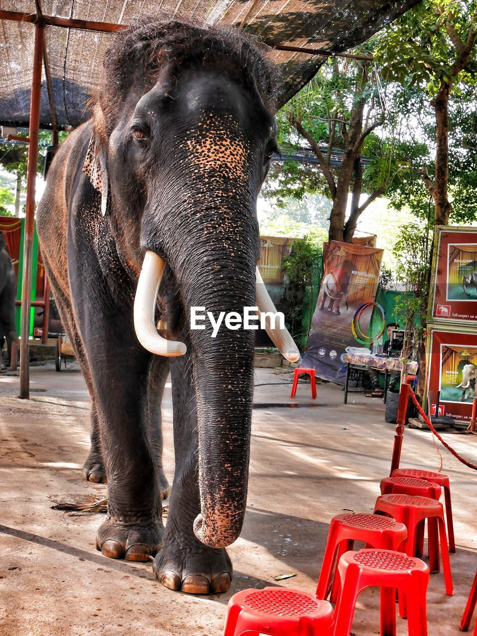 elephant, animal themes, animal, vertebrate, mammal, day, tree, animal wildlife, one animal, animals in captivity, outdoors, plant, animal trunk, animal body part, zoo, nature, animals in the wild, real people, built structure, herbivorous