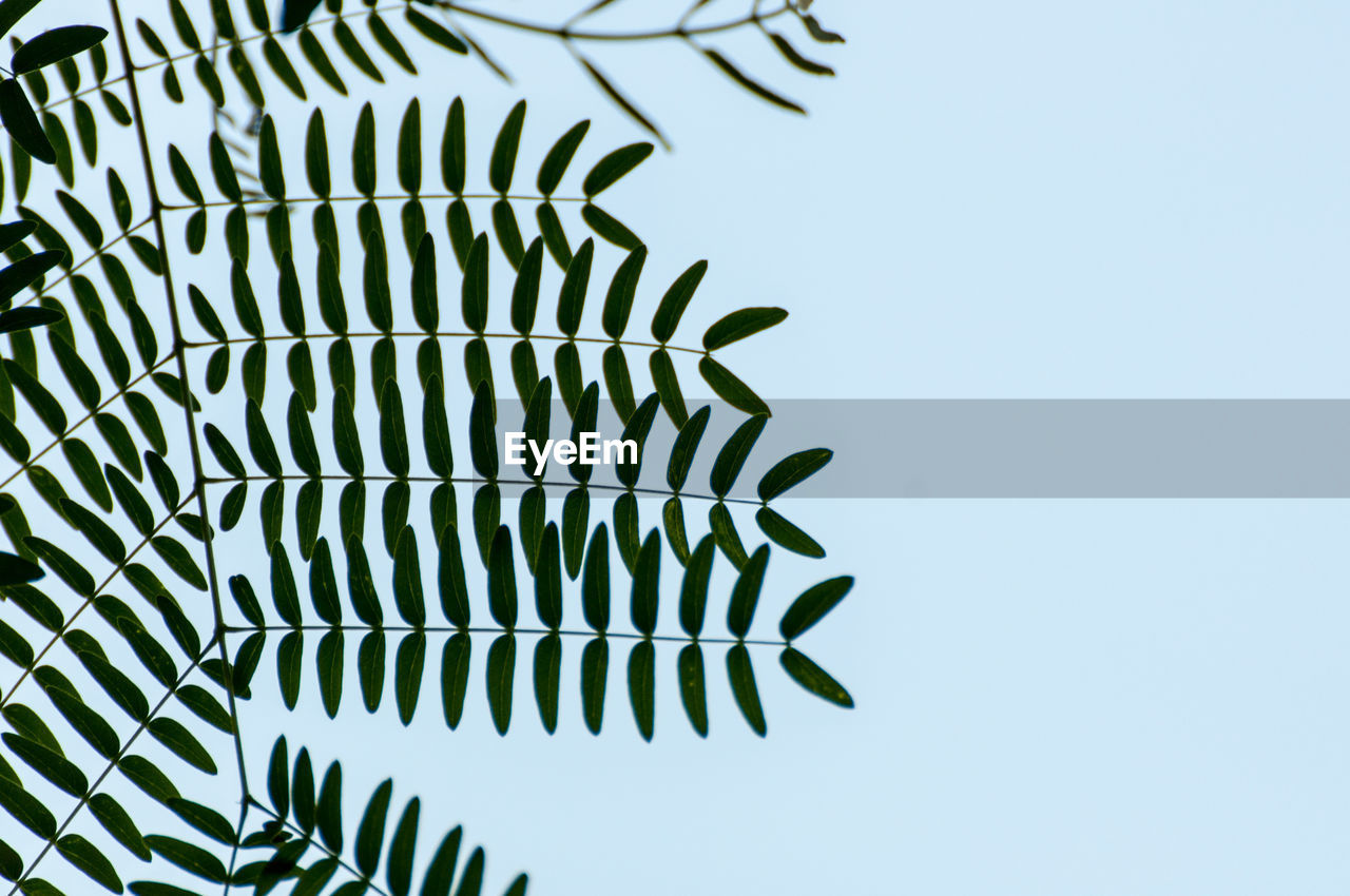 clear sky, no people, low angle view, day, pattern, outdoors, green color, close-up, nature, blue, growth, sky, beauty in nature