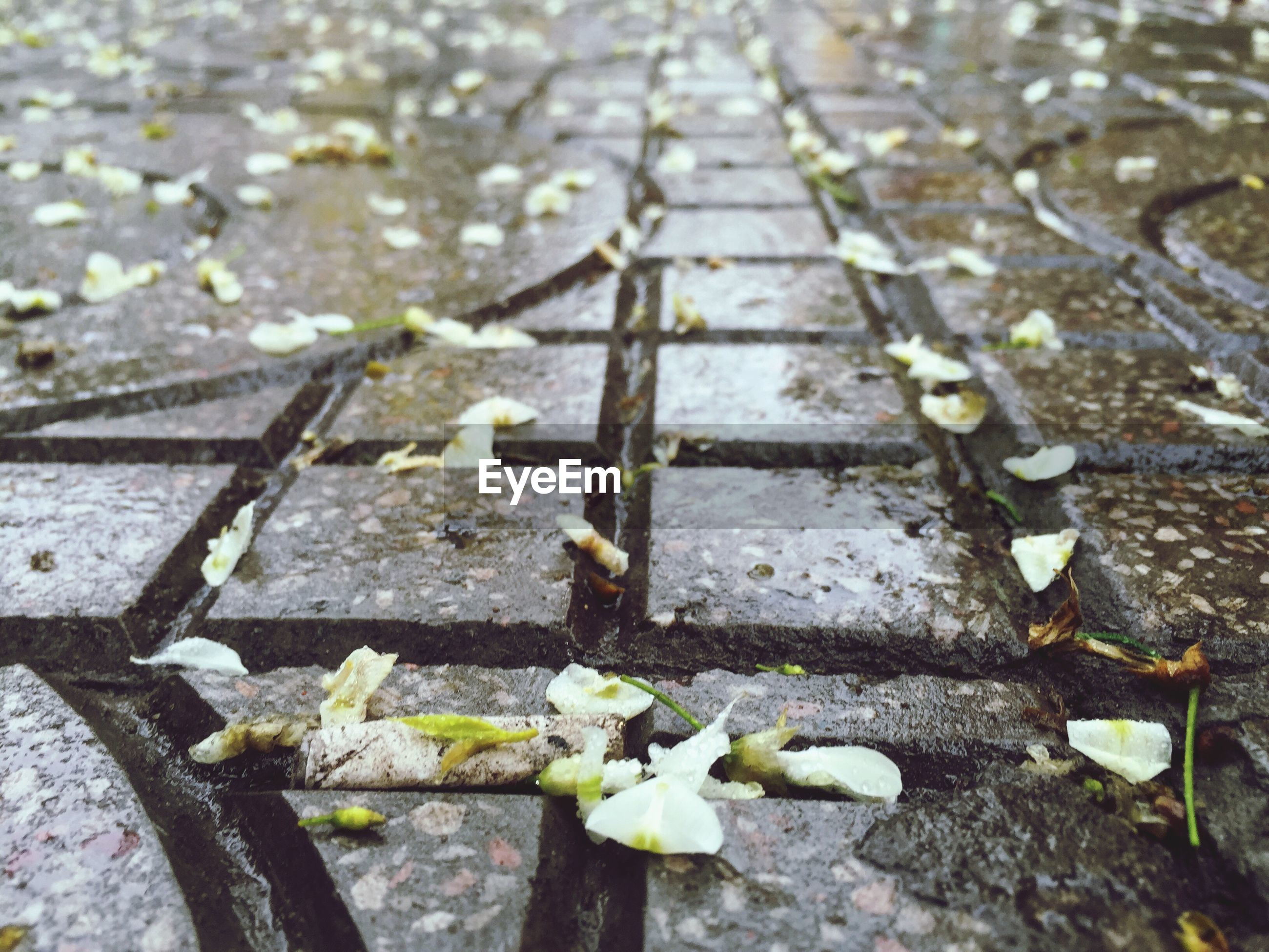 high angle view, the way forward, surface level, close-up, day, selective focus, street, outdoors, textured, railroad track, transportation, no people, stone - object, water, leaf, wet, wood - material, asphalt, metal, diminishing perspective