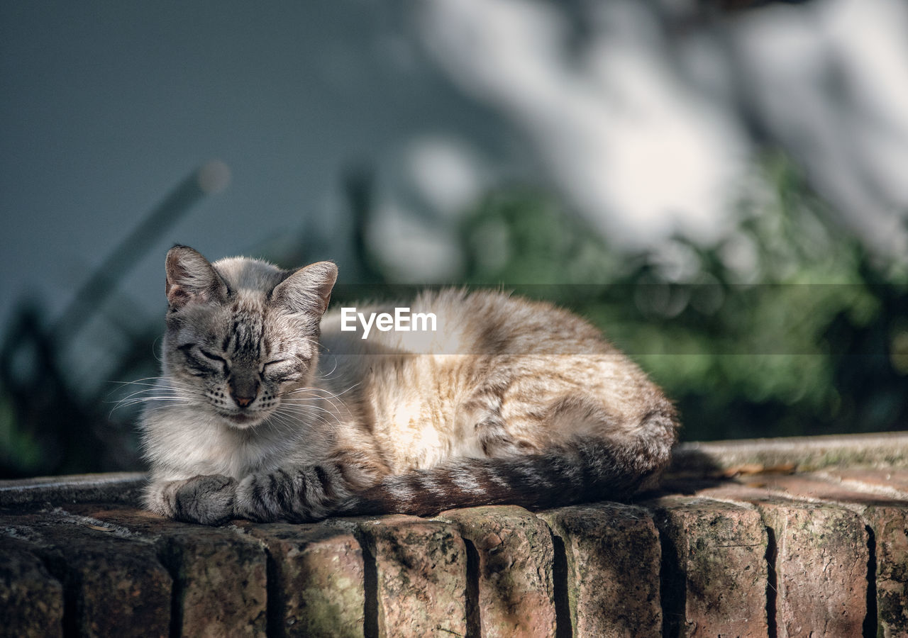 one animal, animal themes, mammal, feline, cat, animal, domestic, pets, domestic animals, domestic cat, vertebrate, relaxation, focus on foreground, no people, day, wood - material, looking at camera, wall, whisker, portrait, tabby