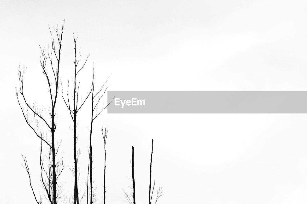 bare tree, copy space, nature, clear sky, tranquility, low angle view, beauty in nature, outdoors, branch, no people, day, tree