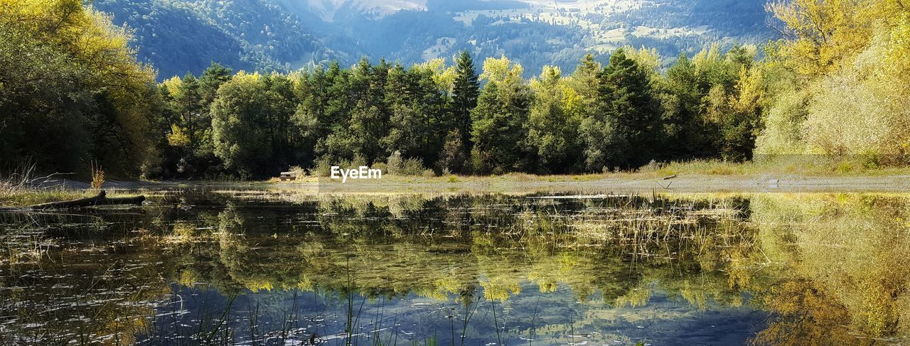 tree, reflection, lake, water, nature, beauty in nature, scenics, forest, tranquil scene, day, no people, outdoors, tranquility, growth, mountain, waterfront, grass, sky