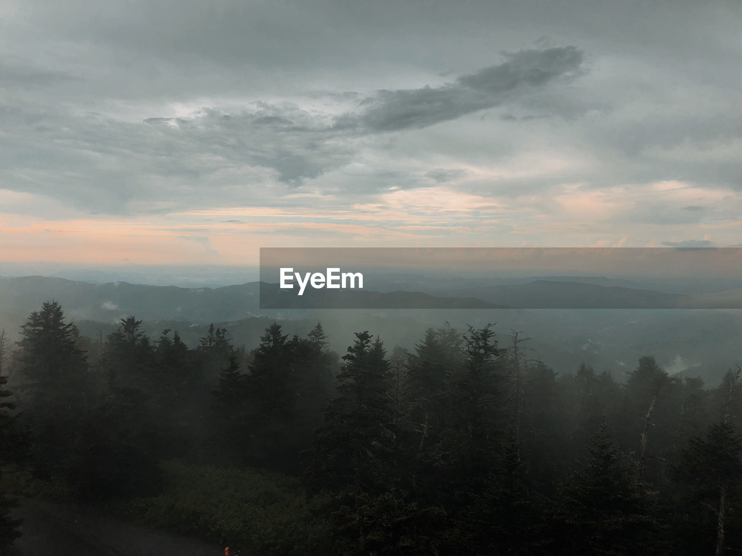 SCENIC VIEW OF TREES AND MOUNTAINS AGAINST SKY DURING FOGGY WEATHER