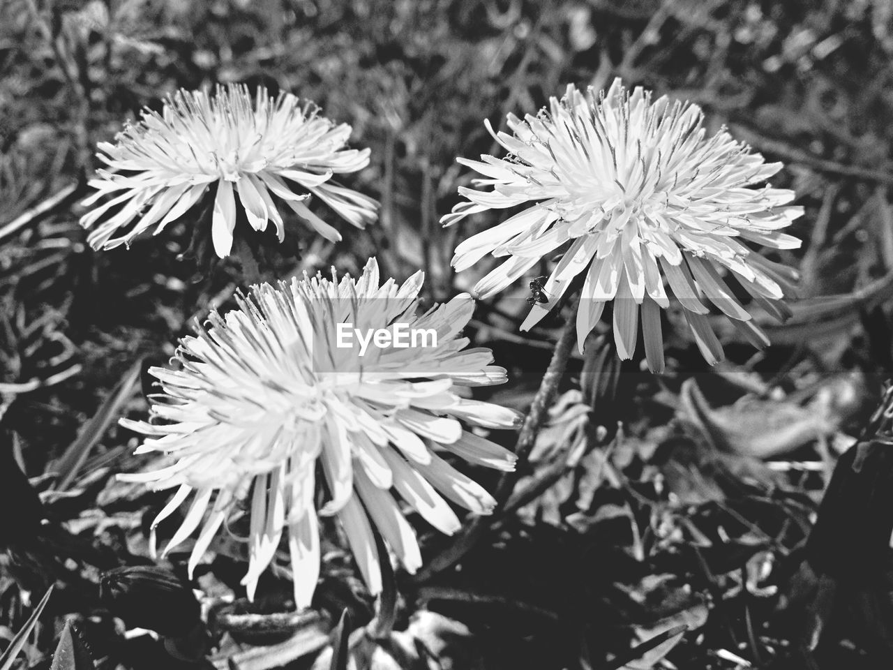 flower, flower head, petal, fragility, nature, beauty in nature, growth, plant, freshness, blooming, day, no people, outdoors, close-up