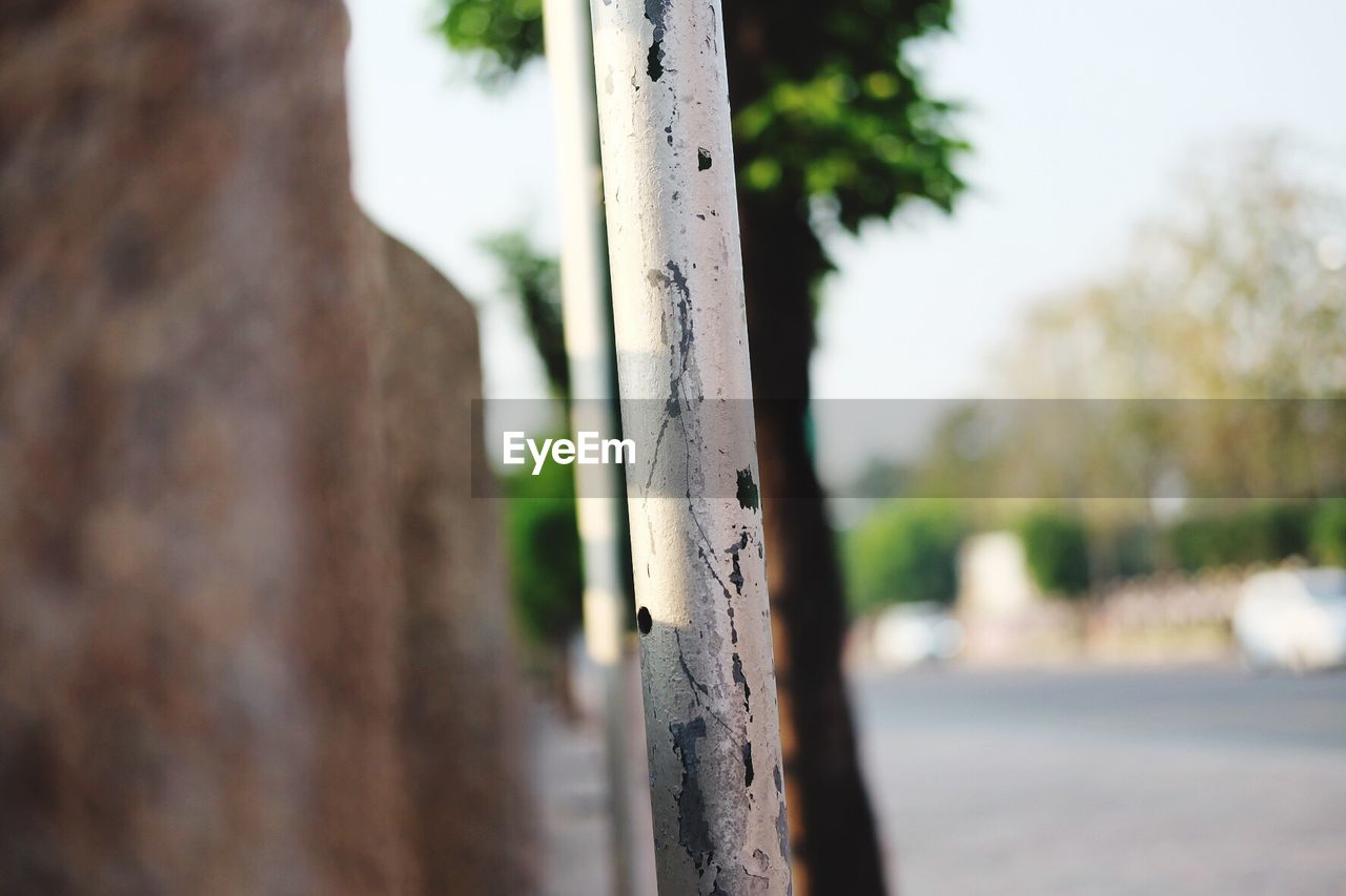 focus on foreground, close-up, day, outdoors, no people, tree, tree trunk, nature, sky