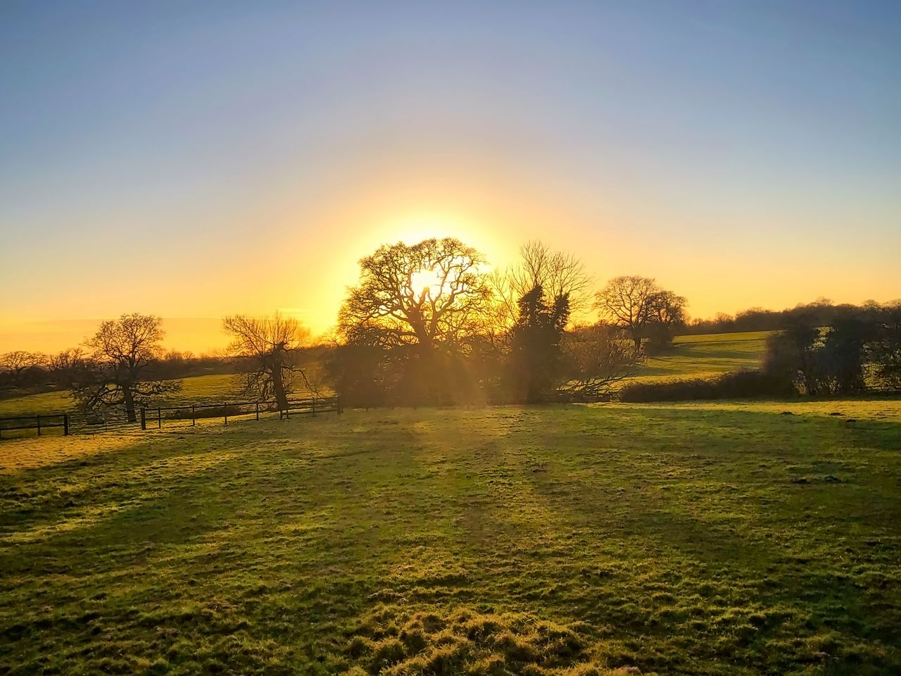 tree, sunset, grass, beauty in nature, nature, sunlight, scenics, tranquil scene, landscape, tranquility, field, no people, sun, idyllic, green color, outdoors, sky, clear sky, day, golf course