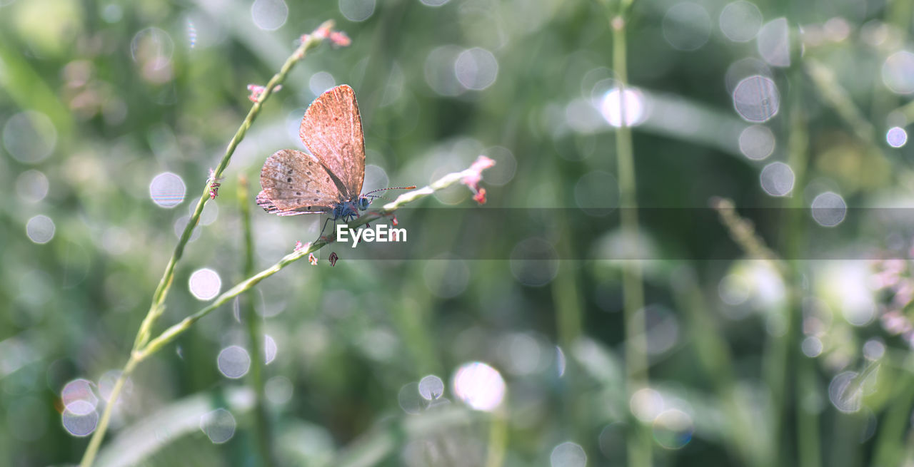 plant, close-up, invertebrate, animal, beauty in nature, animal themes, one animal, insect, animal wildlife, growth, focus on foreground, no people, nature, animals in the wild, green color, day, drop, selective focus, plant part, vulnerability, outdoors, animal wing, butterfly - insect, dew, butterfly, raindrop