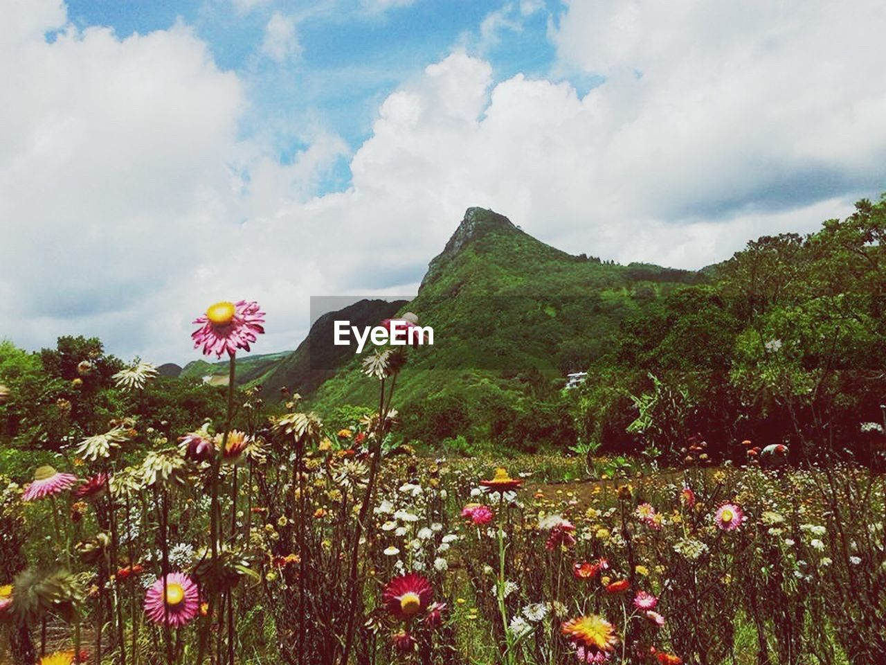 flower, nature, beauty in nature, cloud - sky, growth, sky, outdoors, day, tranquility, no people, tranquil scene, mountain, plant, scenics, green color, freshness, fragility, landscape, flower head