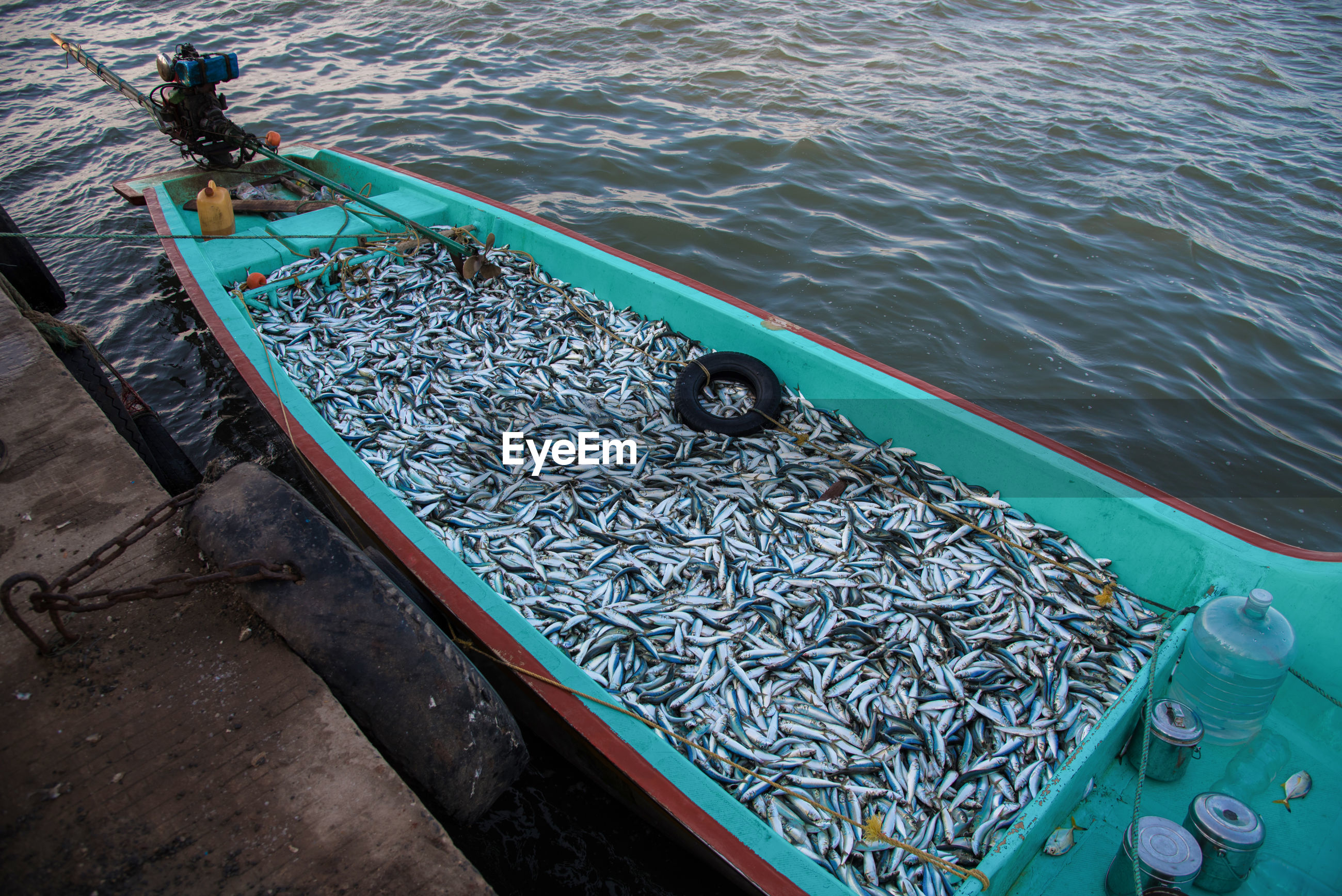 High angle view of fish in boat moored at harbor