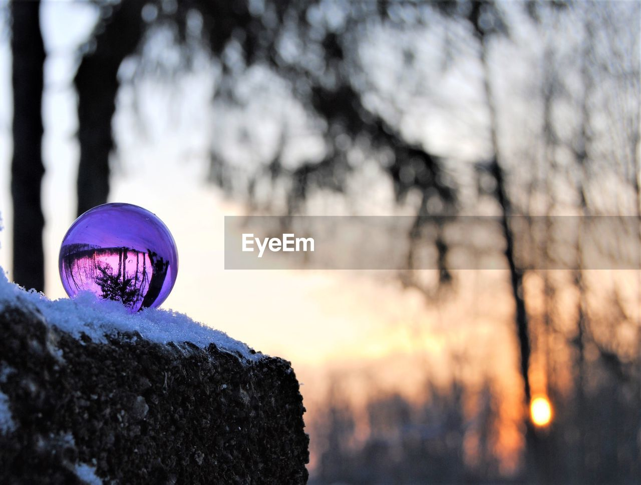 tree, no people, outdoors, sunset, tree trunk, nature, close-up, beauty in nature, sky, day