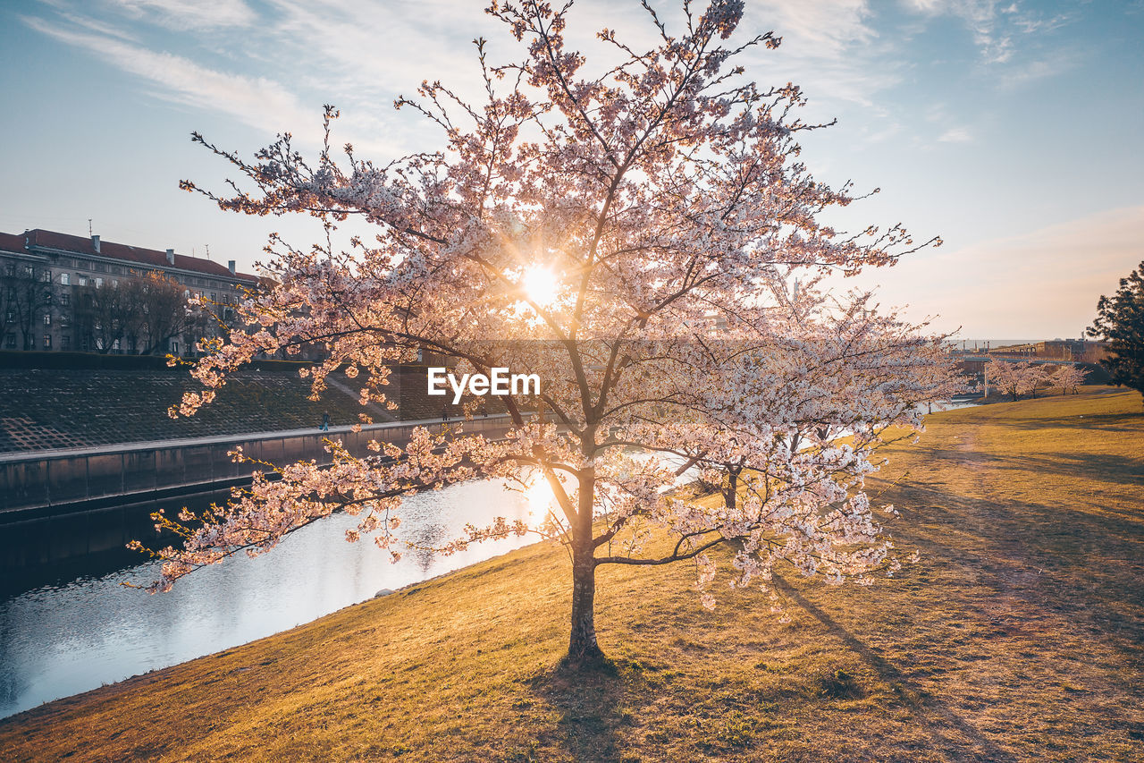 tree, sky, water, plant, nature, sunlight, architecture, beauty in nature, no people, sun, river, built structure, building exterior, outdoors, scenics - nature, sunbeam, city, lens flare, day, bright