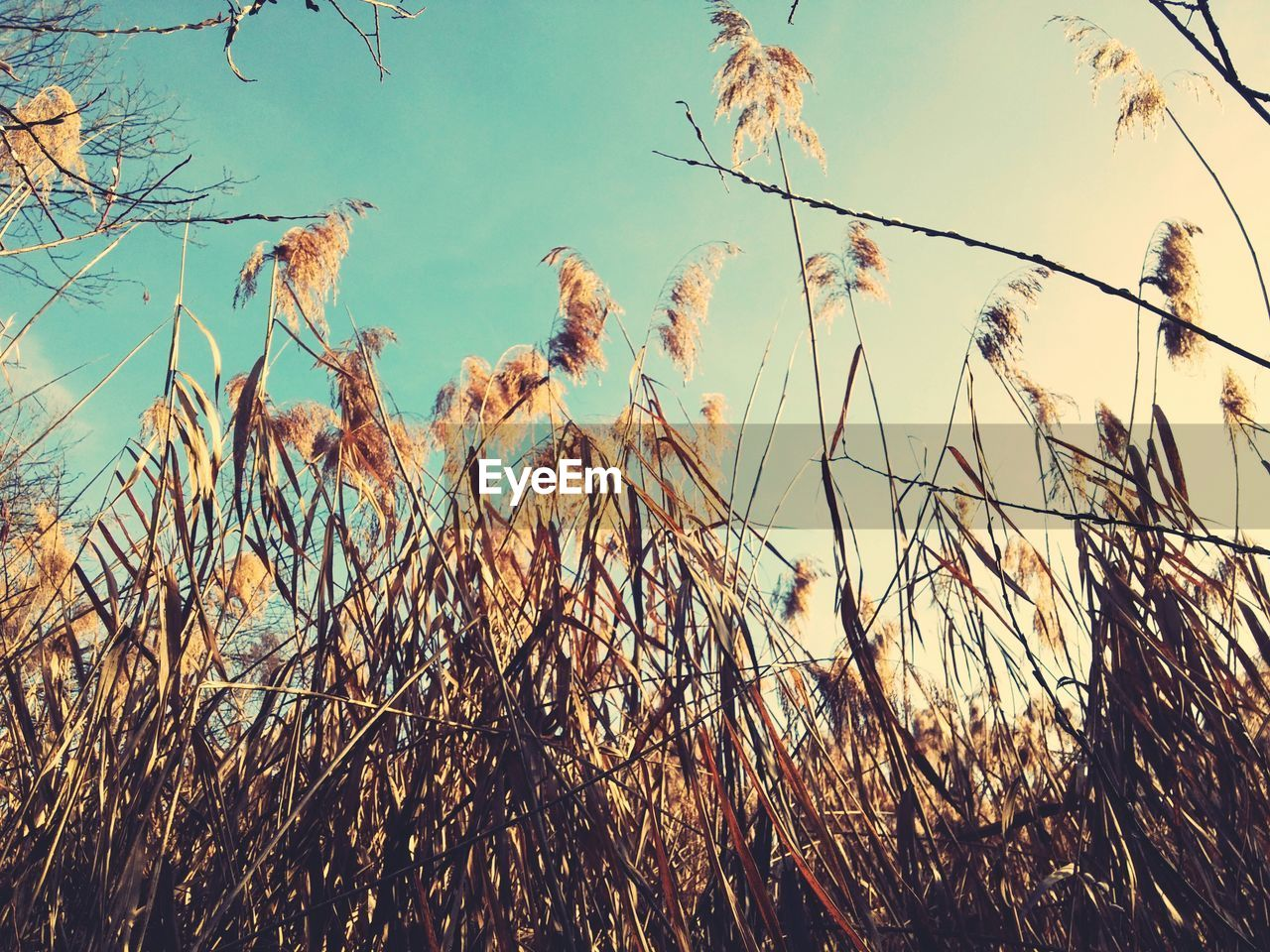 nature, growth, plant, grass, outdoors, no people, tranquility, day, beauty in nature, sky, close-up