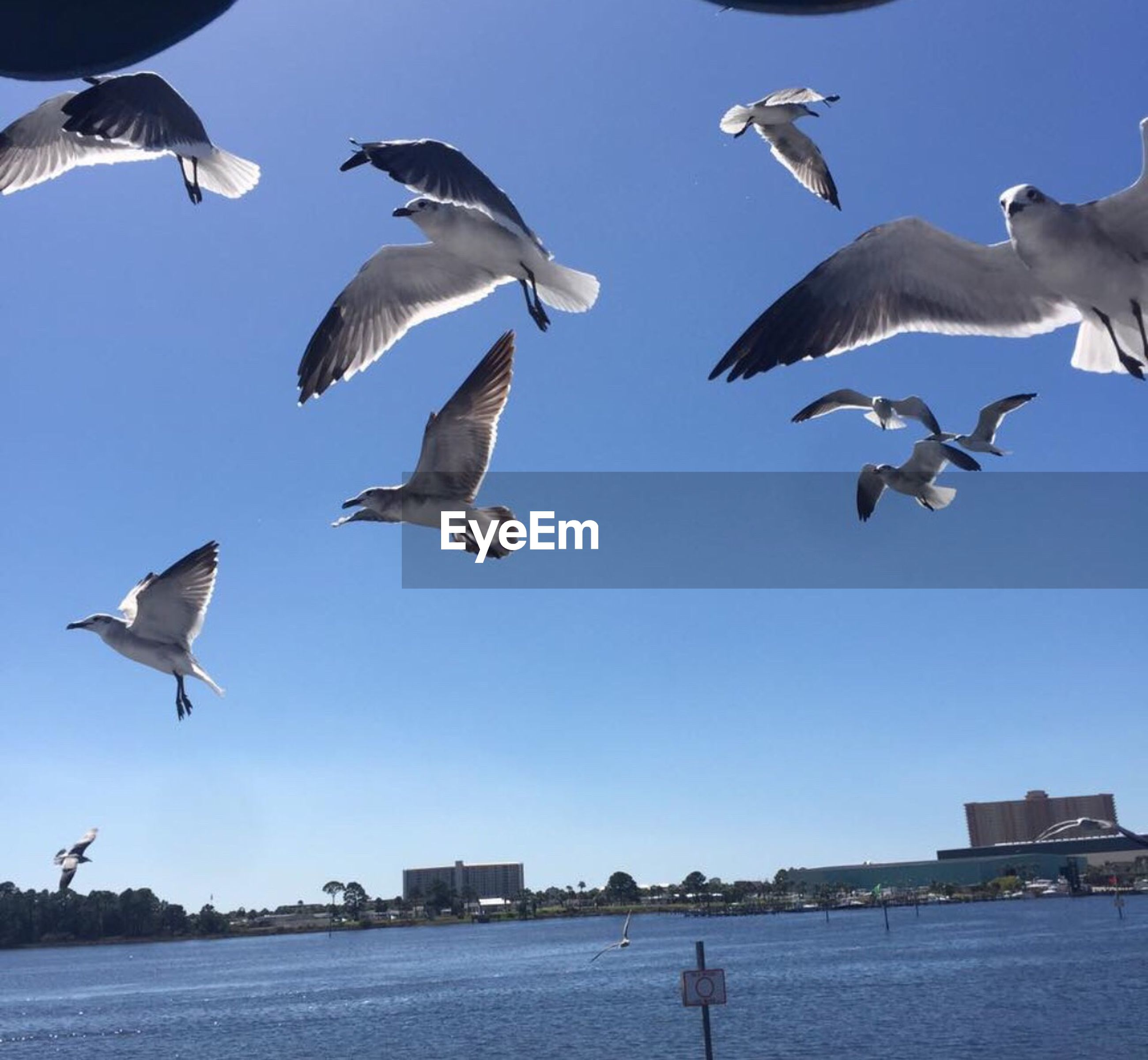 flying, bird, animals in the wild, animal wildlife, mid-air, animal body part, animal themes, low angle view, large group of animals, full length, outdoors, flock of birds, travel destinations, sky, city, sea, representing, spread wings, no people, beach, day, togetherness, sea life