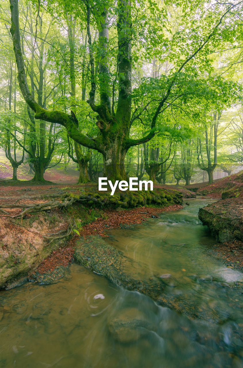 tree, water, forest, plant, tranquility, nature, land, day, beauty in nature, scenics - nature, no people, green color, river, woodland, reflection, tranquil scene, non-urban scene, tree trunk, outdoors, stream - flowing water, flowing water, flowing, rainforest, willow tree, swamp