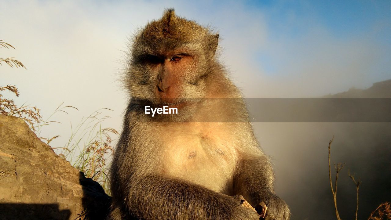 animal, animal wildlife, animals in the wild, animal themes, primate, monkey, mammal, vertebrate, sky, one animal, no people, nature, day, focus on foreground, sitting, rock, outdoors, looking away, sunlight, low angle view, animal head, baboon