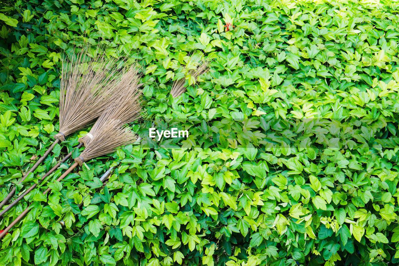 High angle view of brooms on plants